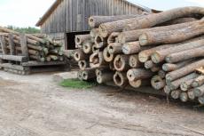 «Народный фронт» взял под контроль состояние лесного фонда в Килемарском районе