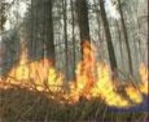 15 апреля в Марий Эл объявлено датой начала пожароопасного сезона