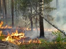 В выходные горел лес в национальном парке Марий Чодра