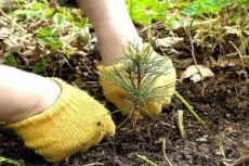 Марийский лесной фонд увеличился на 350 000 новых деревьев