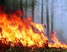 В Марий Эл огонь продолжает уничтожать лесной массив и жилой сектор