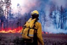 В Марий Эл количество лесных пожаров растёт в геометрической прогрессии